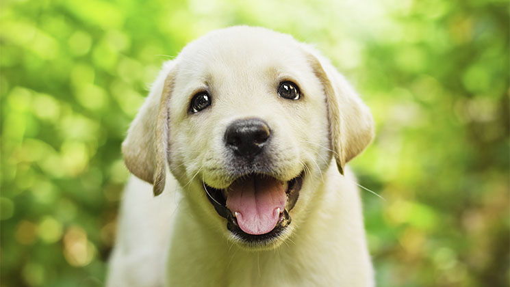 A puppy can put a smile on just about anyone's face but if you're not too careful, they can make quite an impact on the look of your home too. It's worth doing a bit of prior preparation before you welcome a puppy into your family.
