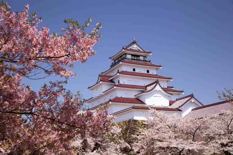 Aizuwakamatsu castle and sakura blossom in Japan