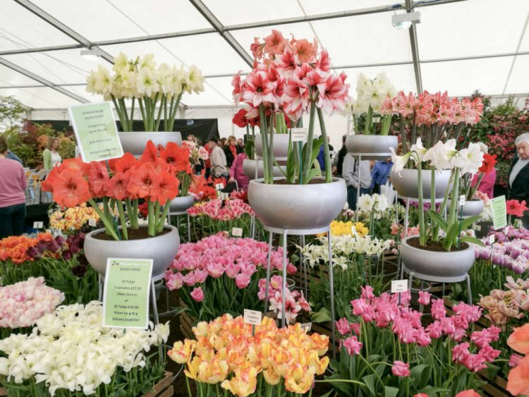 The RHS Malvern Spring Festival has more to offer than just the Show Gardens. From eating and shopping to the gorgeous Floral Marquee, take a look around the rest of the show.