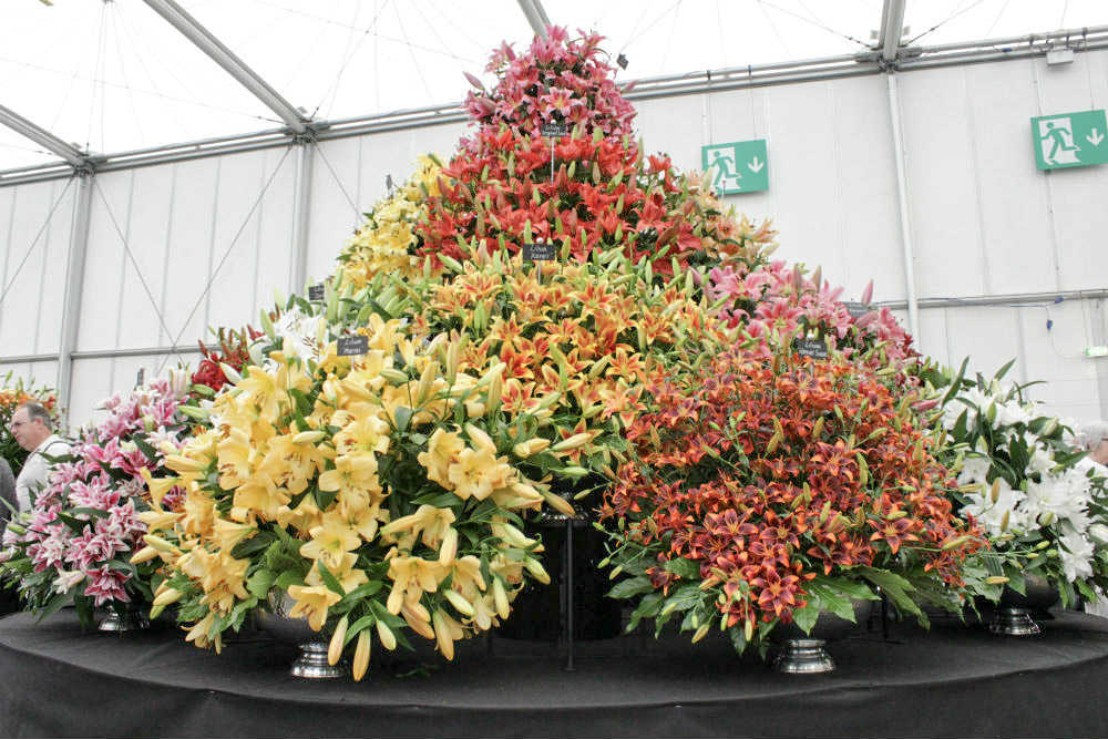 A towering display of lilies at the BBC Gardeners World Live exhibition 2017