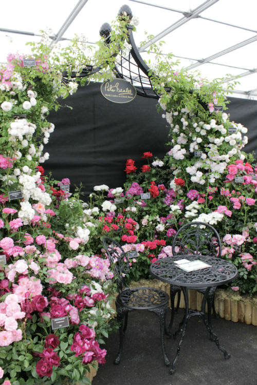 The Peter Beales stand at the BBC Gardeners World Live exhibition 2017