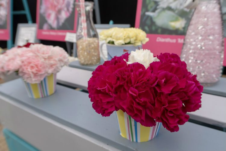 A display of brightly coloured Dianthus on the Calamazag stand at the RHS Cardiff flower show 2018