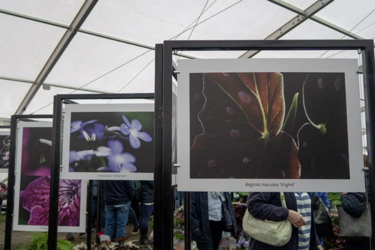 A display of photographs from Dibleys Nurseries, Master Grower at the RHS Flower Show Cardiff 2018