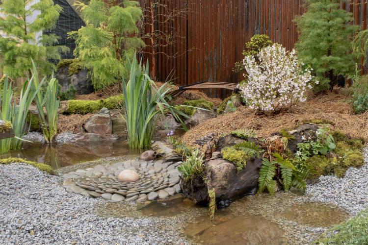 Bonsai trees and wild planting in the Disequilibrium Show Garden at RHS Cardiff 2018