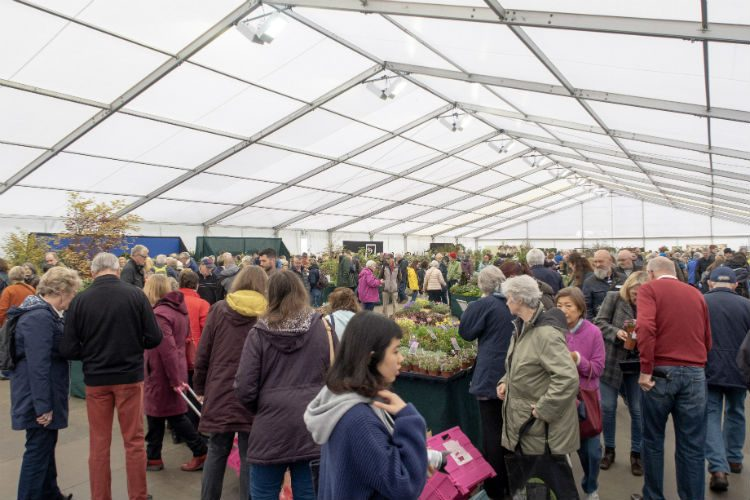 Inside the floral marquee at the RHS Flower Show Cardiff 2018