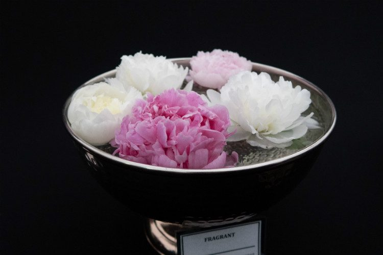 A bowl of pink and white peony flowerheads on the Primose Hall Nursery stand at RHS Cardiff 2018