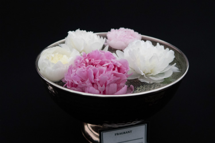 A bowl of fragrant peonies floating in water at the RHS Flower Show Cardiff 2018