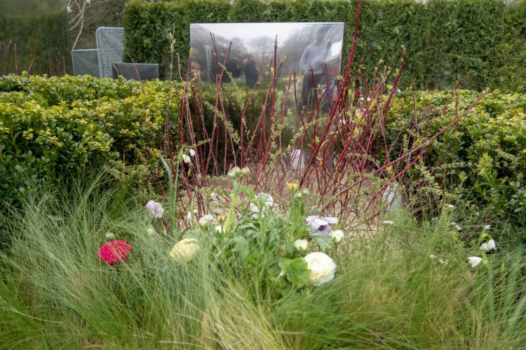 Clipped box hedges, red switch grass and soft hellebores in The Reflection in the Past Garden - a show garden at RHS Cardiff 2018 that is inspired by childhood memories in Korea