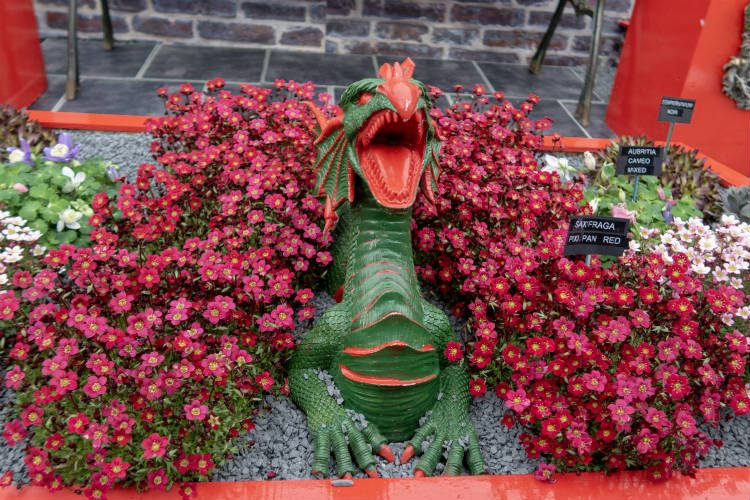 A red and green dragon ornament surrounded by bright red Saxifraga Pixi Pan Red, seen at RHS Cardiff 2018