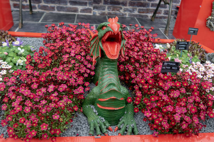 A Welsh Dragon surrounded by Saxifraga Pixi Pan Red at the RHS Flower Show Cardiff 2018