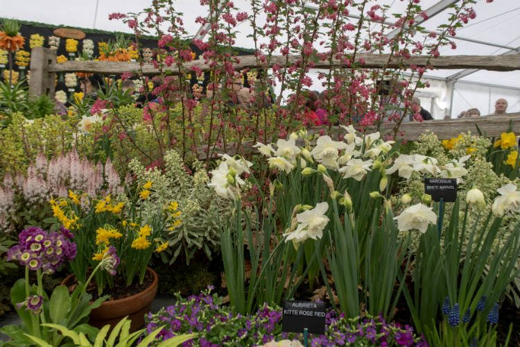 A display of spring flowers on the Pheasant Acre Plants stand at the RHS Flower Show Cardiff 2018