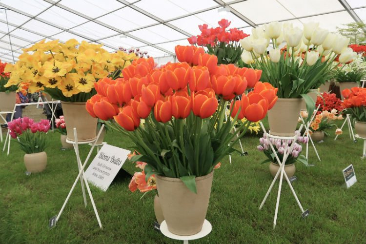The Bloms Bulbs stand at the RHS Malvern Spring Festival 2018