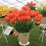 The Floral Marquee at RHS Malvern Spring Festival 2018