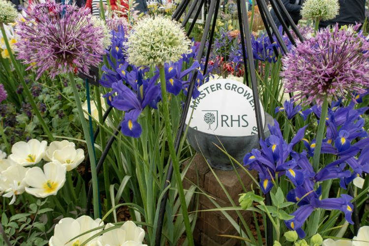 Aliums and irises on the Avon Bulbs stand at the RHS Malvern Spring Festival 2018