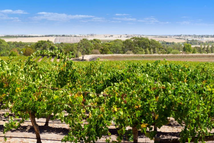 Barossa Valley near Adelaide, a great place for foodies to visit in Australia