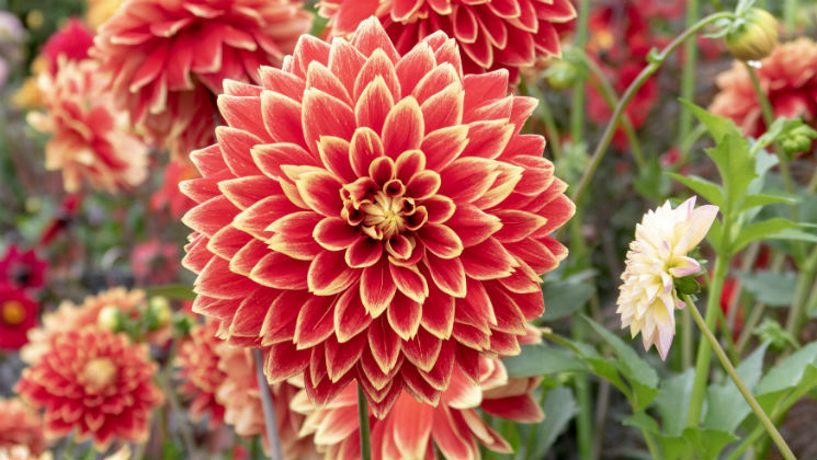 Take a look at the beautiful displays in the Floral Marquee at BBC Gardeners' World Live 2018, from decorative herbs to dazzling Dahlias.