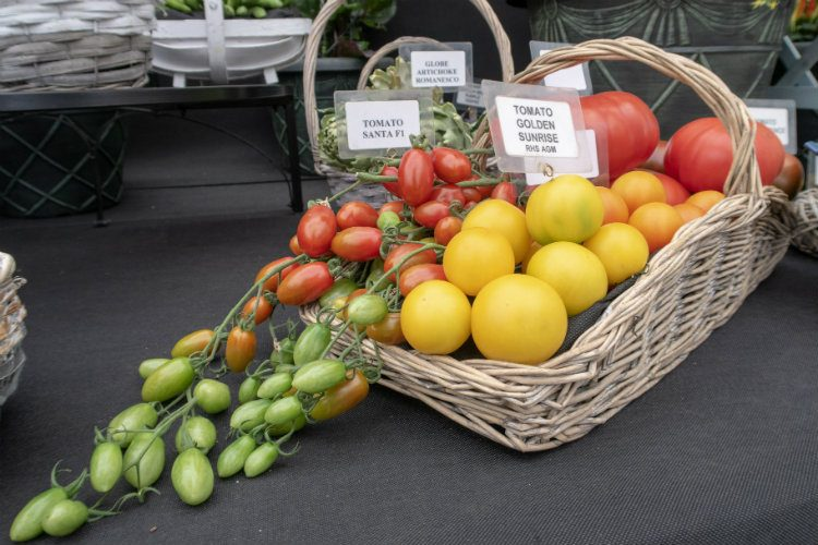 A beautiful selection of show tomatoes on the W Robinson & Son stand