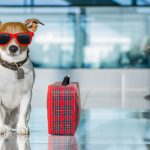 Easy Tips for Travelling with Dogs