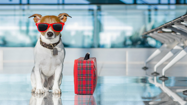 If you're taking your dog on holiday with you soon, here are some tips that will make travelling with dogs easy!