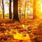 Autumn is here, and October is shaping up to be a fantastic month here on SallyAkins.com!