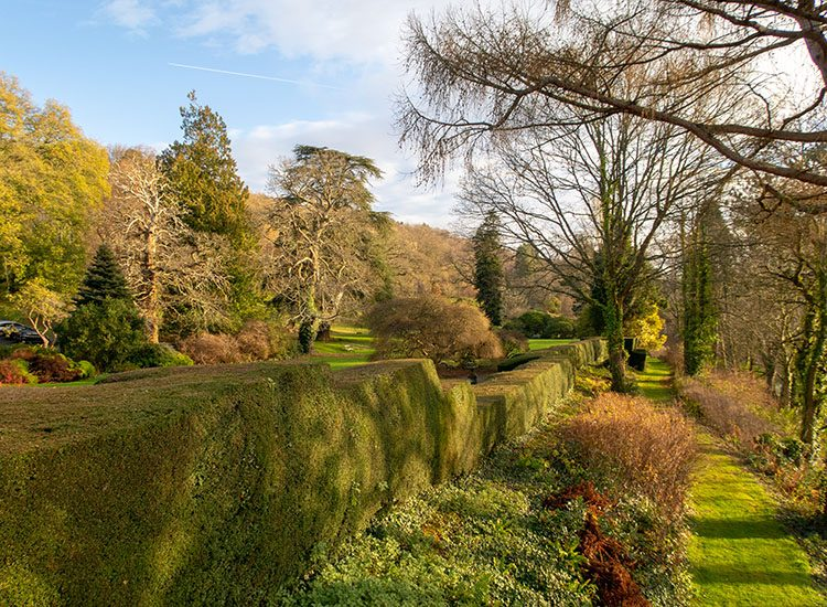 Trees and borders in the gardens at Gliffaes Country House Hotel, near Crickhowell in South Wales