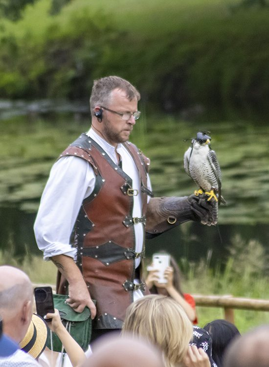 A falconer carries a peregrine falcon on his gloved hand at the Falconer's Quest at Warwick Castle, Warwickshire, UK