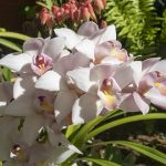 Take a look around the elegant Orchid Garden at Sitio Litre, in the city of Puerto de la Cruz, Tenerife.