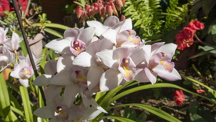 Take a look around the elegant Orchid Garden at Sitio Litre, in the city of Puerto de la Cruz, Tenerife.
