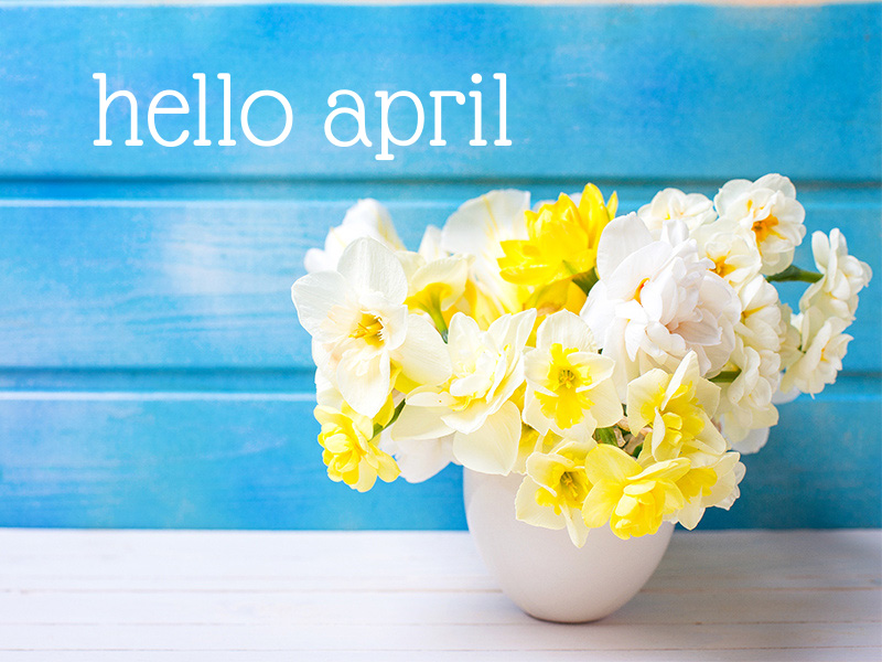 A bunch of yellow and white daffodils in a white vase against a bright blue background. The words 'Hello April' are in the top left corner of the image