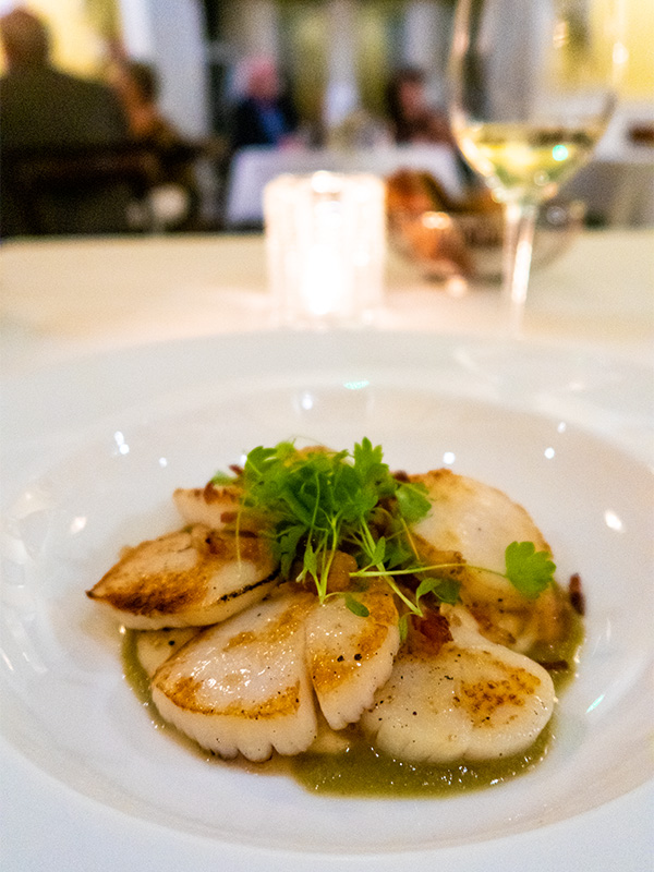 Seared scallops on a white china plate at Tyddyn Llan hotel in Llandrillo, North Wales
